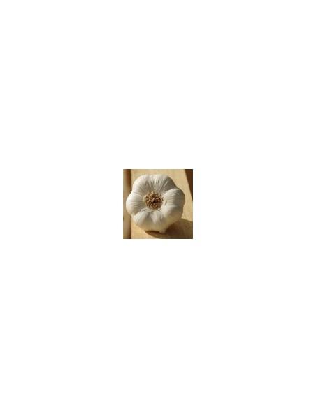 AIL BLANC IGP DROME 3 TETES - MAISON BOUTARIN - Maison Ferrero - Epicerie à Ajaccio